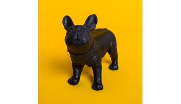 Bulldog Black etalage decoratie
